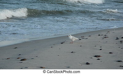seagull on the sea beach sand