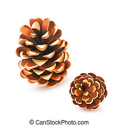 vector Pine cones isolated on white