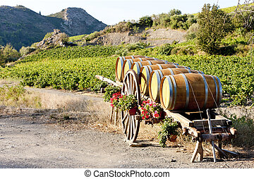 vineyard with barrels, Villeneuve-les-Corbieres,...