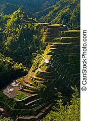 Rice fields on the Luzon Island in philippines