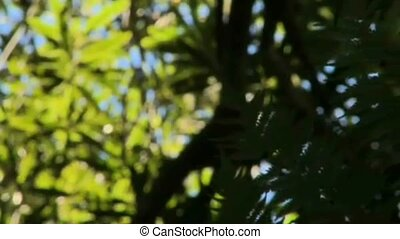 NZ ferns - New Zealand's native bush is well known for the...