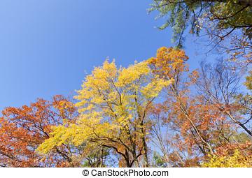 Fall Scenery.