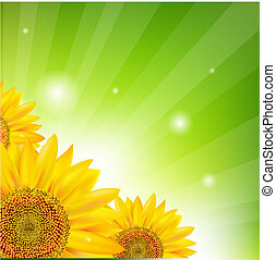 Sunflower And Sunburst, Vector Illustration