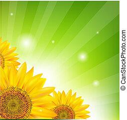 Sunflower And Sunburst, Vector Illustration