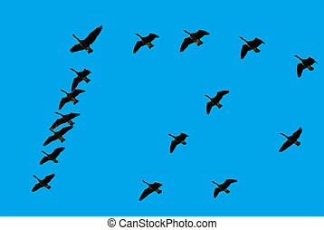 Geese In Formation - Geese flying in formation.