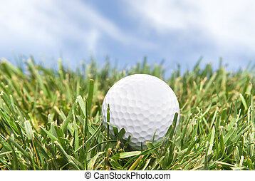 Golf ball in the rough - A golf ball sits in the rough on a...