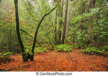 Lush temperate rain forest in Northern California