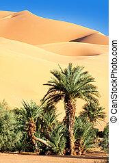 oásis, deserto