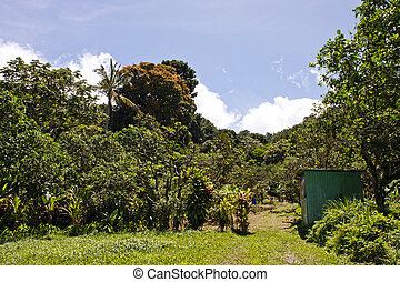 Vegetable Garden in the Tropics