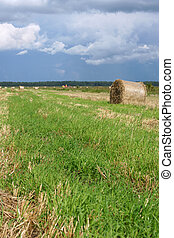 Round straw bales in the meadow, a vertical picture