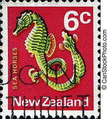 Seahorses fish - Hippocampus - NEW ZEALAND - CIRCA 1970: A...