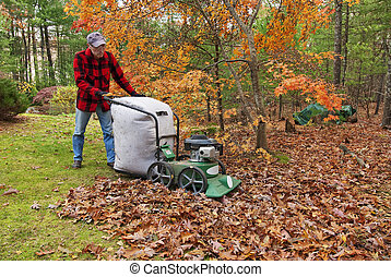 Vacuuming leaves in the fall - Senior vacuuming autumn...