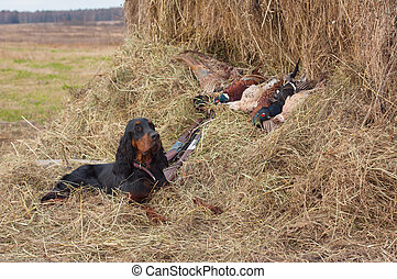 Successful bird shoot - Bird dog resting after the hunt...