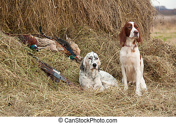 Successful bird shoot - Two Bird dog resting after the hunt...