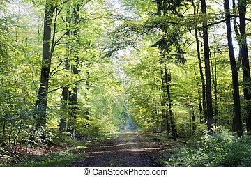 morning forest - forest awakening - morning light falls on...