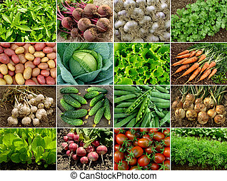 vegetables and greens - organic vegetables and greens