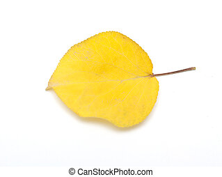 yellow leaves on white background