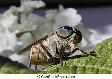 horsefly landed on a leaf