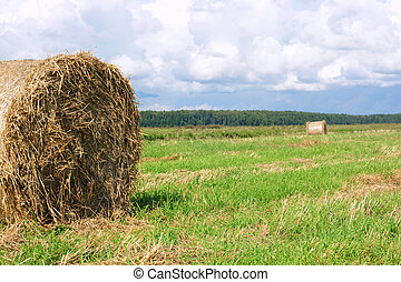Round straw bales in the meadow