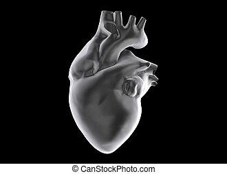human heart - 3d human heart