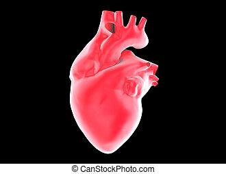 heart - 3d human heart