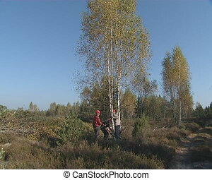 Workers cut young birch grove with