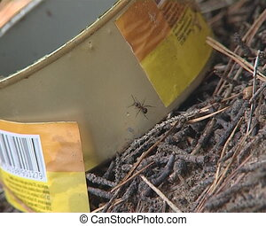 Ants flit on preserves box - Ants flit through preserves box...