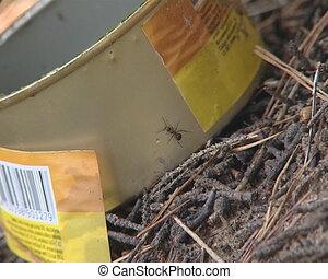 Ants flit on preserves box - Ants flit through preserves box...