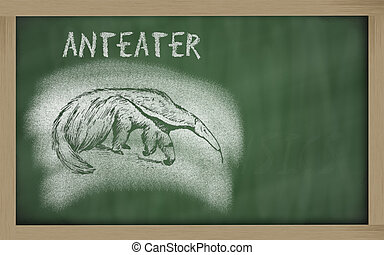 sketch of anteater on blackboard Myrmecophaga tridactyla -...
