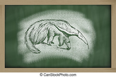 sketch of anteater on blackboard (Myrmecophaga tridactyla) -...