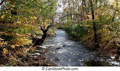 Stream In Fall Foliage - Fall foliage hangs over Owens...