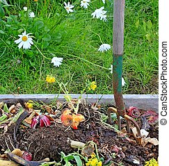 Compost pile with daisies - Close up view of a compost pile...