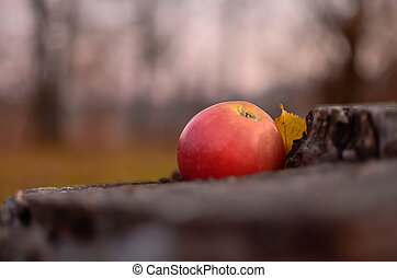 Focus on the red - A red apple and a yellow leaf on the stub