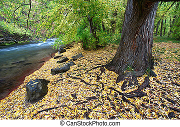 Cache River Utah in the fall