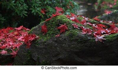 Japanese Garden landscape in Fall