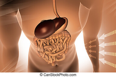 Human body with digestive system - Digital illustration of...
