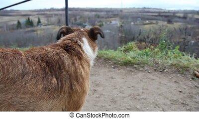 Dog near fortress