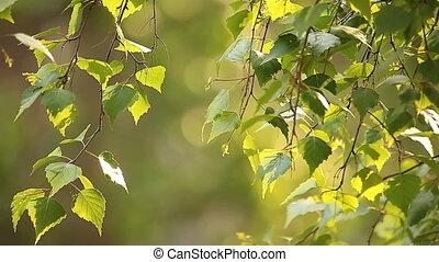 spring foliage - spring fresh foliage