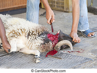 Sheep being traditionally killed for the Eid festival -...
