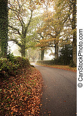 Beautiful forest landscape of foggy misty forest in Autumn Fall with road winding through trees
