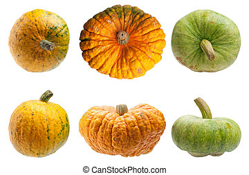 Colourful pumpkins isolated on white background -...