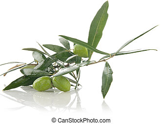 olive branch - Fresh olive branch with leaves on white...