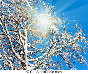 Sunshine in winter tree twigs on blue sky background