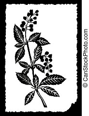 drawing of the plant on white paper