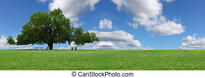 A pano of a large oak tree in a grass field in a park used as a shade tree for picnic tables on a gorgeous summer day with clouds and a gorgeous blue sky with room for your text.