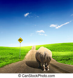 wild rhino wlaking on a road - Collage with big wild rhino...