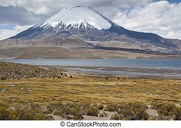 Chungar Lake - Chungara Lake and Parinacota volcano, Lauca...