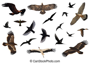 Bird Collection - A number of birds isolated on white.