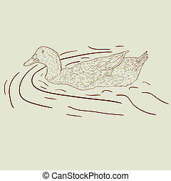 Wild duck Hand-painted vector illustration