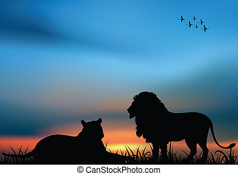 Lion and lioness in the African savanna